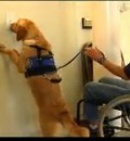 Assistance Dogs Provide Wonderful Help for Those with Limited Mobility