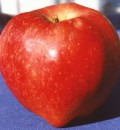 Compound in Apples May Help Build Muscles &#038; Fight Obesity and Diabetes, New Study Suggests