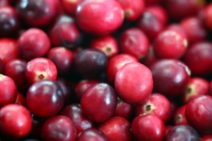 Cranberry Products Do Help Prevent UTI, Study Finds (image courtesy of Wikipedia Commons)